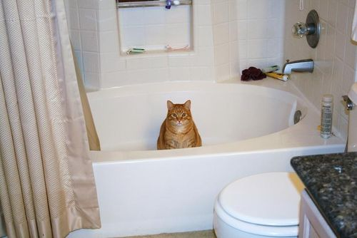 Colby in tub